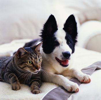 Save Maryland Pets